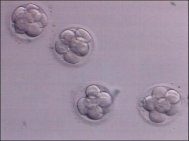 embryo donation in India