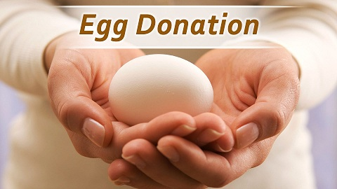 egg donor sharing in India
