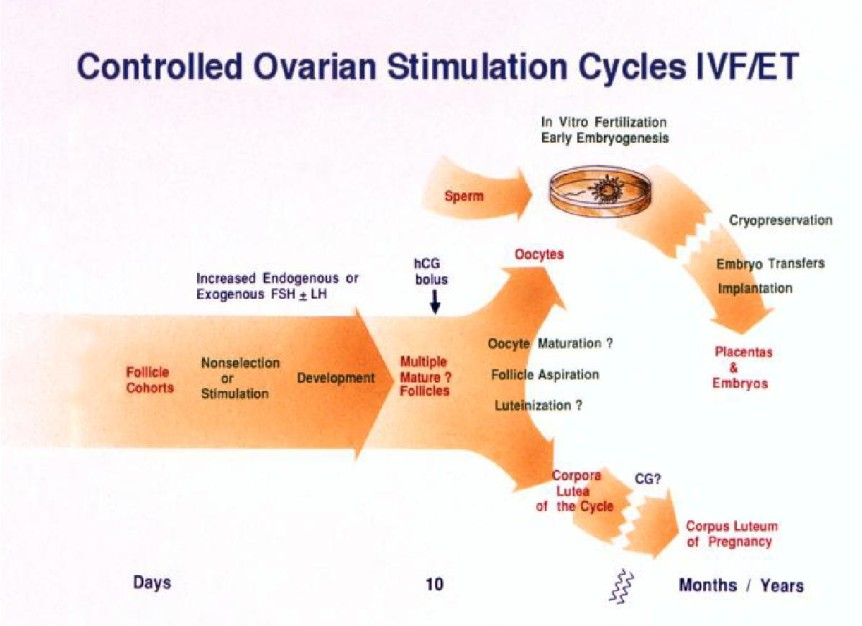ivf cycle