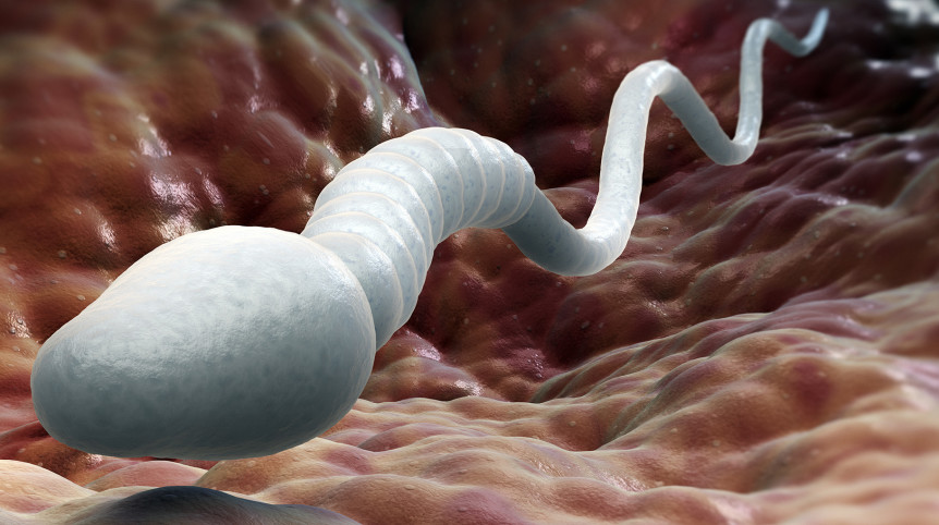 Azoospermia-or-no-sperm-count